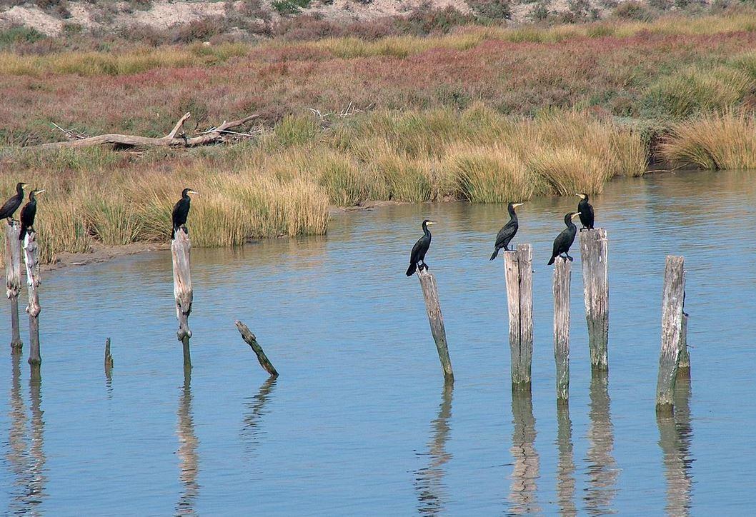 España debe revisar el impacto ambiental del dragado del Guadalquivir, según la CE