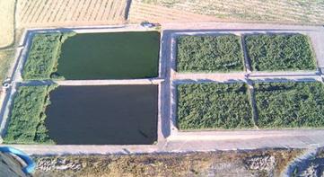 ¿Conoces los sistemas de humedales construidos de Cataluña? - iAgua.es