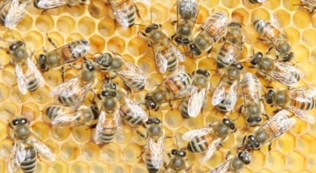 La cosecha de miel de esta primavera en Extremadura roza la catástrofe por la sequía