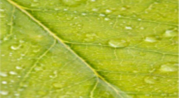 El impacto del cambio climático sobre la agricultura el próximo trimestre será leve, según expertos