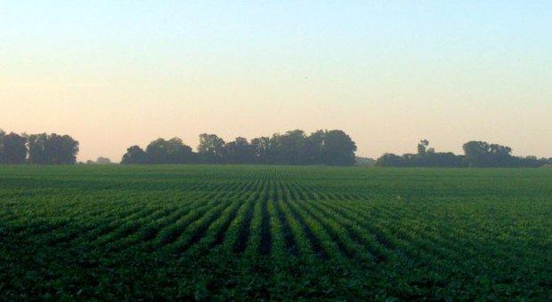 La importancia del comercio de productos agrarios en los usos del agua en América Latina y del mundo