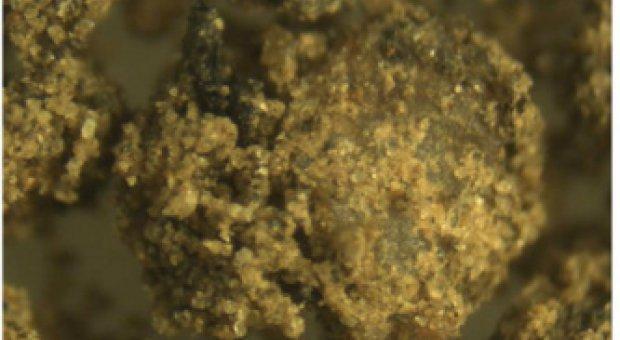 Desarrollan un material a partir de los lodos residuales de depuradoras que mejora el rendimiento agrícola