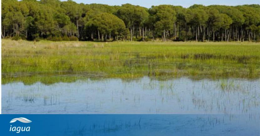 La compra de los mimbrales es una oportunidad nica para for Recuperar agua piscina verde