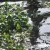 camalote, grave problema río Guadiana espera plan choque