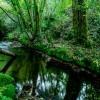 peligro conservación especies autóctonas ríos españoles