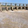 estuario Guadalquivir, ¿al borde colapso ecológico?