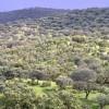 ¿Cómo afecta sequía economía pastos arbolados dehesa?
