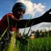 clima está cambiando, y agricultura y alimentación deben cambiar él