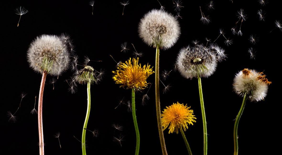 primavera, alergia altera: ¿ qué alérgicos deseamos que llueva?