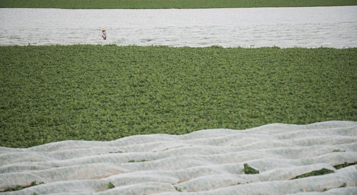 Si agricultura es mayor consumidor agua, no es antojo o indolencia
