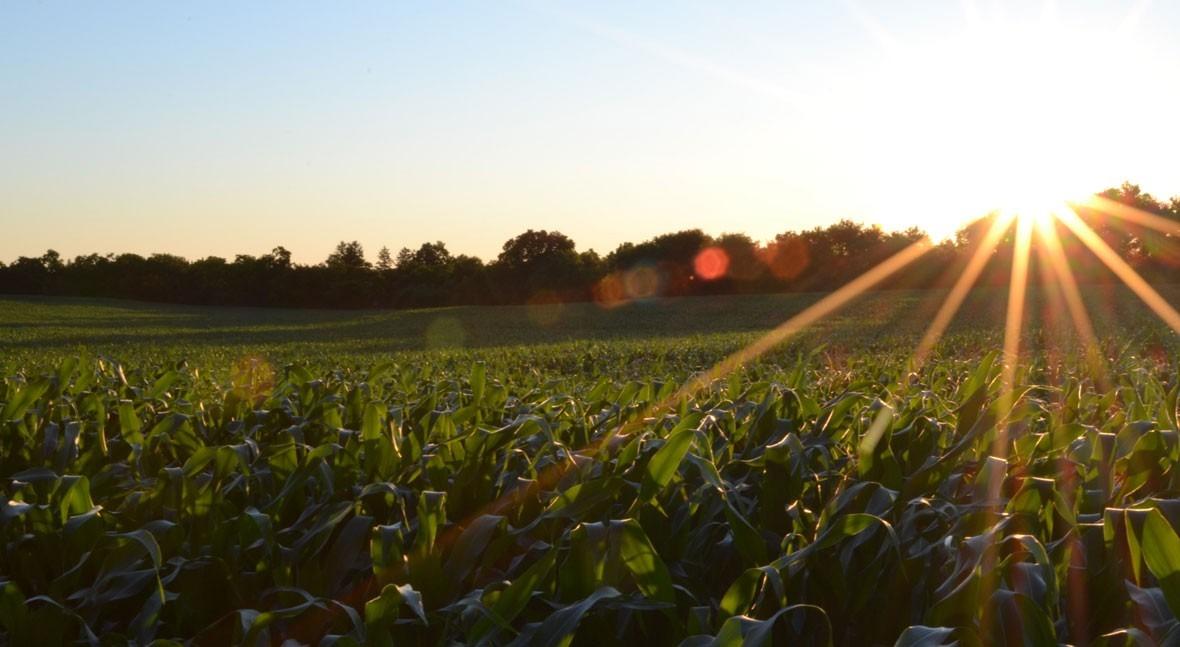 agricultura tiempos COVID-19