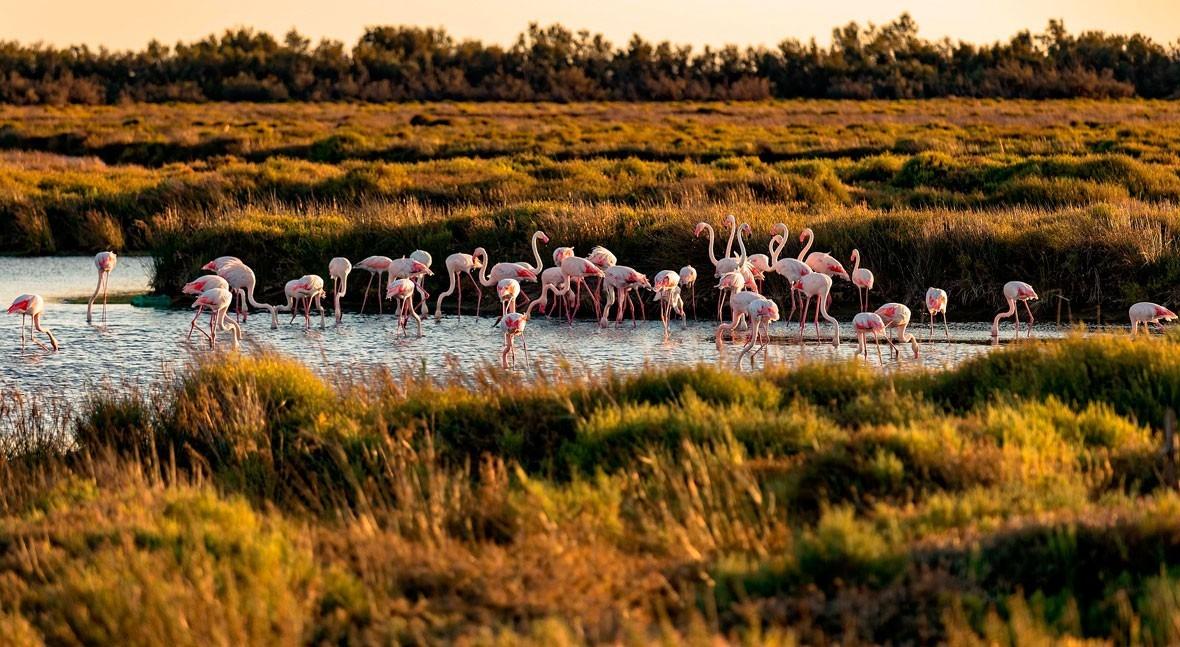 Día Mundial Humedales: belleza biodiversidad