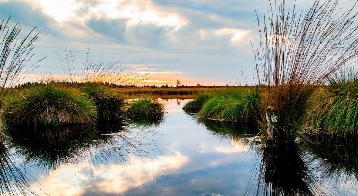 Circularidad, biodiversidad y adaptación al cambio climático