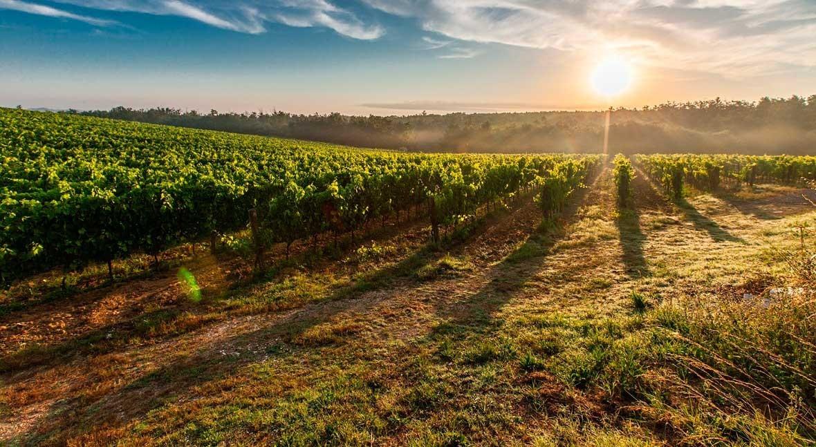 innovación riegos garantiza eficiencia agricultura