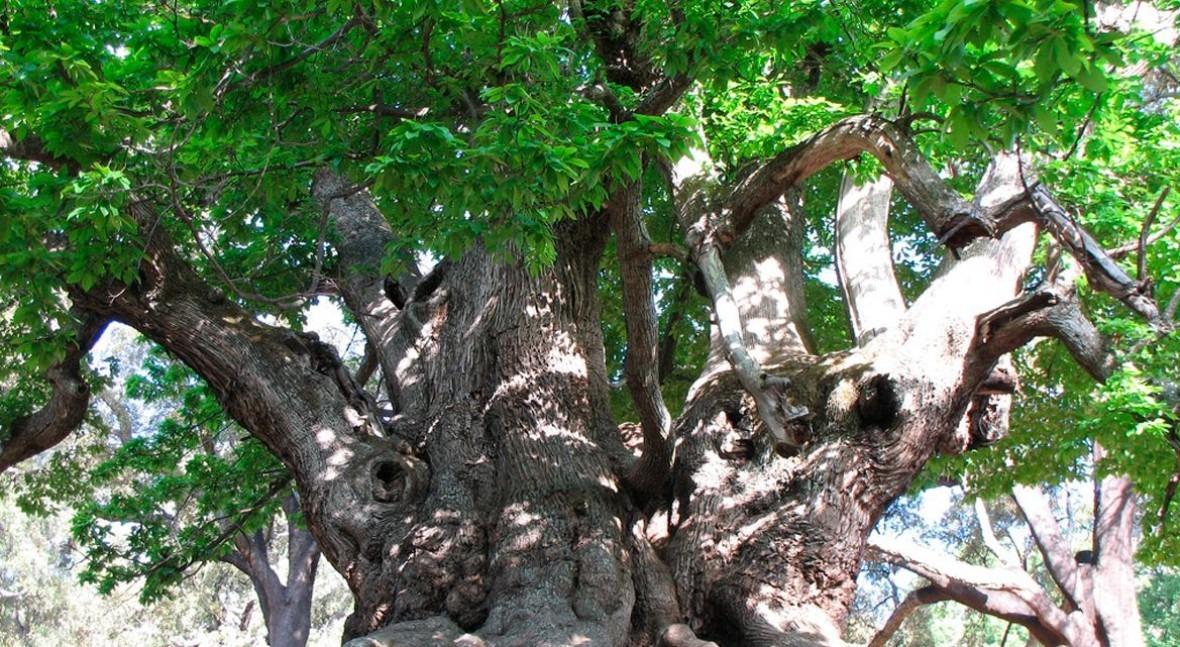 Diez árboles celebrar naturaleza