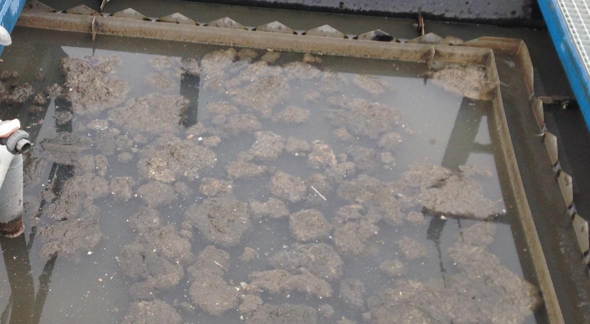 Problemas lodos biodiscos y lamelares