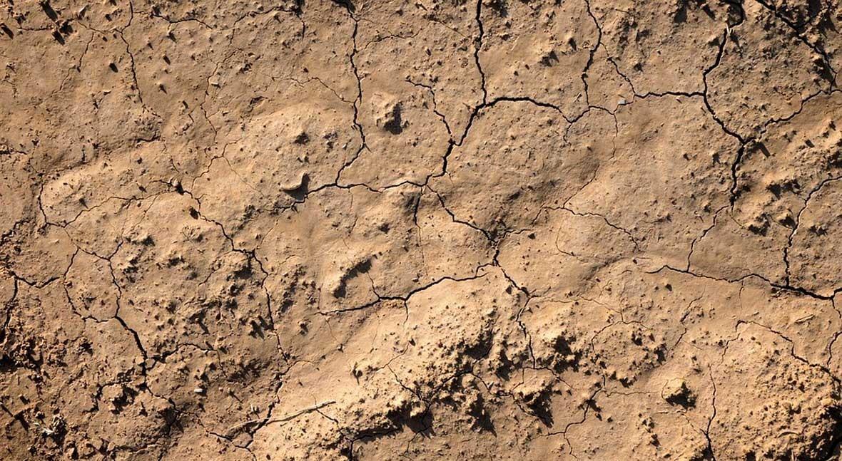 Día Mundial Lucha Desertificación y Sequía 2019: construyamos futuro juntos