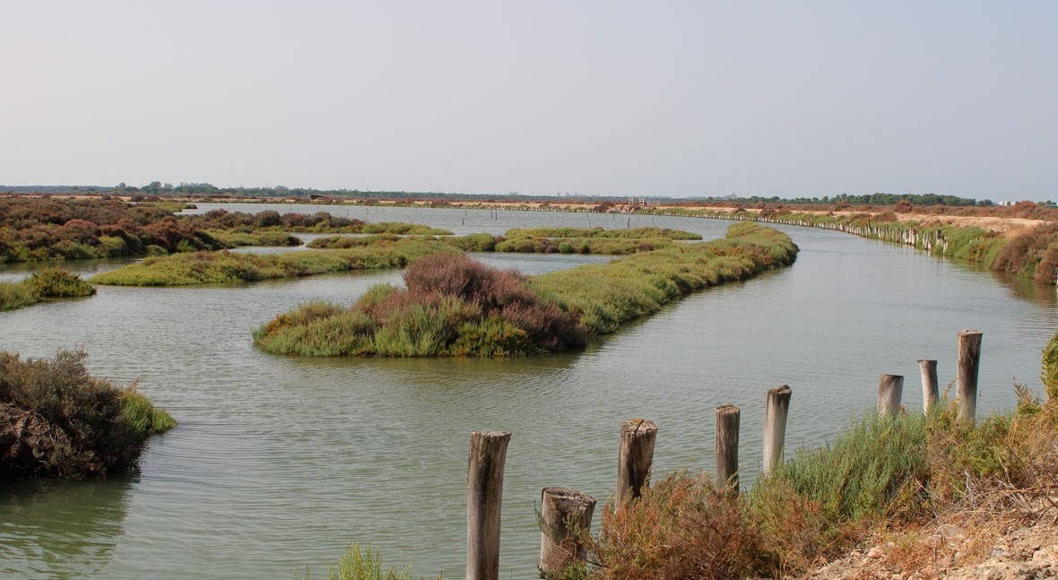 Foro Economía Agua reivindica humedales como solución natural gestión agua