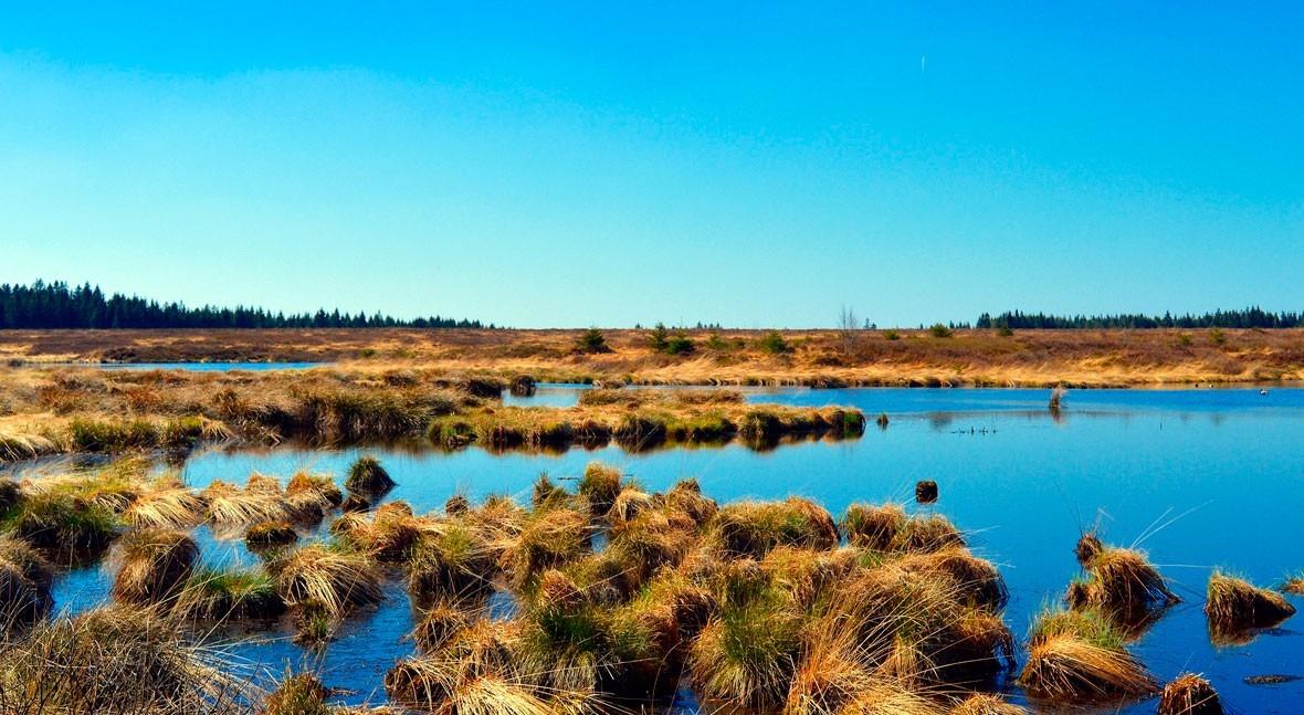 DAM demuestra viabilidad humedales construidos depuración aguas residuales