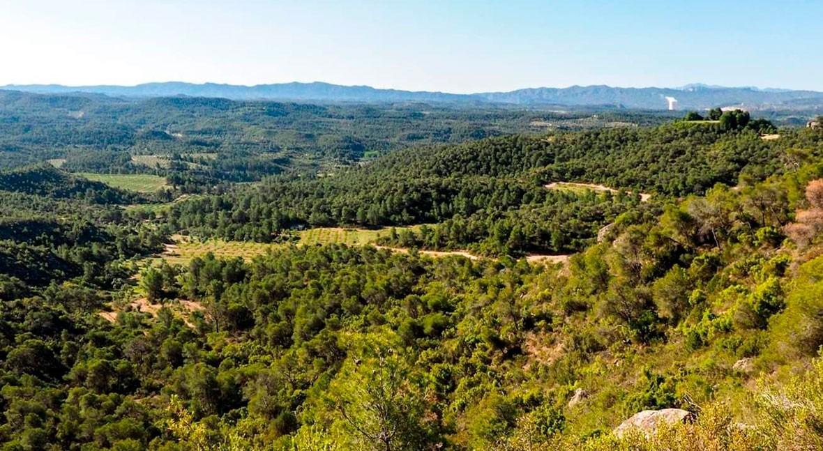 Lo que sí se salvó primer gran fuego verano Cataluña