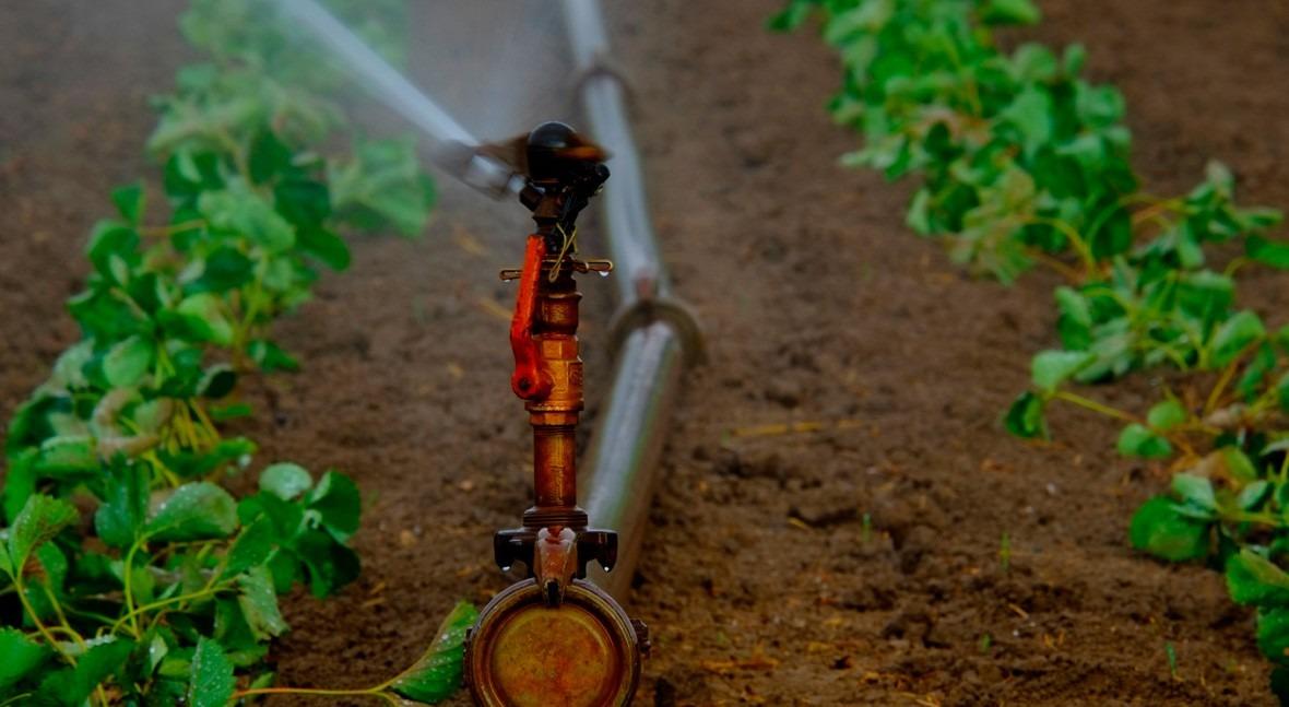 ¿Cómo puede sector agrario contribuir mejor gestión agua?