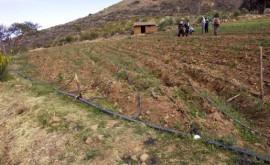Bolivia conoce sistema riego goteo que optimiza uso agua cultivo