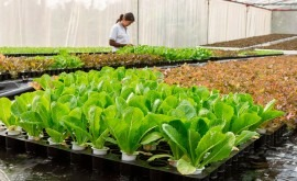 equipo científicos diseña cultivos conservar mejor agua y resistir sequía