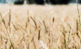 SUEZ Advanced Solutions revoluciona modelo riego agricultura