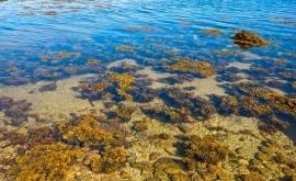 contaminación y cambio climático, factores proliferación algas España