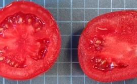 riego deficitario controlado contribuye mejorar sabor y valor funcional tomate