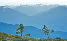 Cambio climático: aumento masa forestal reduce caudal agua ríos