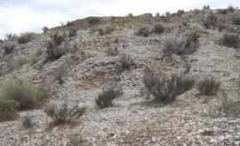 costras biológicas suelo mejoran equilibrio agua ecosistemas semiáridos