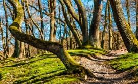 sequía amenaza bosques todo mundo