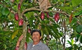 Medidas sencillas adaptación al cambio climático, gran ventaja agricultores tropicales
