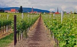 ¿Cómo afectará cambio climático vinos Rioja?