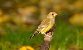 ¿Cómo afectan cambios drásticos meteorológicos primavera reproductividad aves?