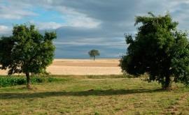 CHG da finalizada campaña riego hortícolas, cítricos, frutales y olivar