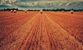 prolongadas sequías Malí hacen que agricultores recurran cultivos híbridos