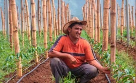 127 millones adaptar agricultura Corredor Seco Salvador al cambio climático