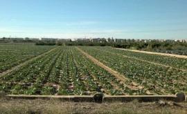 ¿ aplicación excesiva gallinaza huerta Valencia contamina aguas subterráneas?