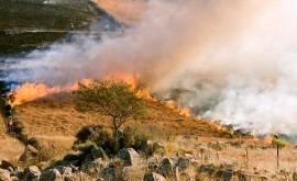 cambio climático provocará incendios más intensos bosques mediterráneos próximos años