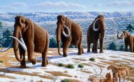 humedad, responsables extinción megafauna Edad Hielo