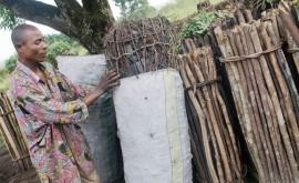 uso más ecológico madera, clave mitigar cambio climático
