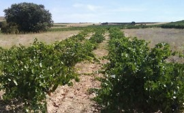agua industria vinícola, Aquaetesis