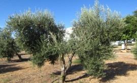 regeneración agua riego Andalucía
