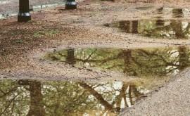 ¿ qué huele tierra mojada?