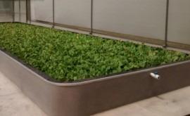 mezcla aguas residuales y microalgas, capaz generar biocombustibles