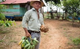 PNUD, al rescate centro agrícola y ganadero Panamá