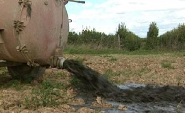Futur Agrari: ¿Cómo distribuir agua granjas cerdos reducir purines?
