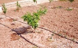 Gobierno valenciano destinará más 3 millones modernizar regadío Alicante
